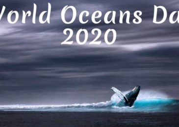 World Oceans Day 2020: Dates, Theme, History, Significance and How to celebrate it?